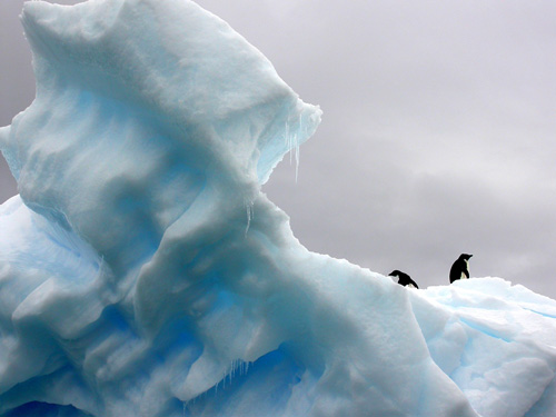 Image penguins in mountain of ice. Penguins is one of the affected living creatures in global warming. CVF target the 1.5 degree celsius to prevent climate change.